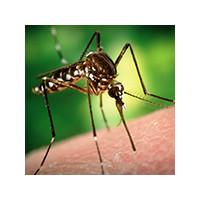 Чем комары опасны для человека