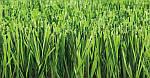 Искусственная трава  для футбола Nature D3 40 мм (Сертификат FIFA)
