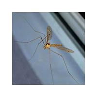 Опасны ли комары и насекомые для людей, фото4