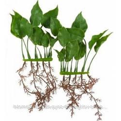 Hagen Marina Anubias rootsc пластиковое растение 15см