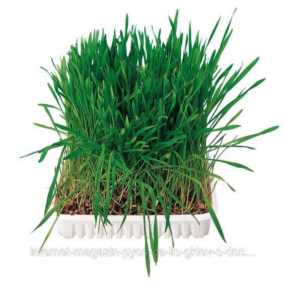 Trixie Small Animal Grass трава для мелких грызунов, 100г
