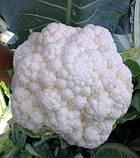 Семена цветной капусты Сантамария F1 (2500 сем.) Rijk Zwaan, фото 2