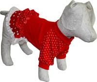 Платье трикотажное для собак  Горошек, фото 1