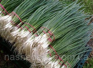 Семена лука на перо Герда 0,5 кг. Semo