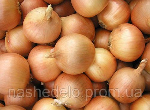Семена лука репчатого Люси 0,5 кг. Semo