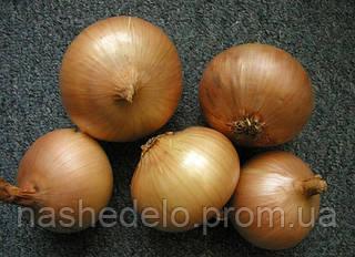 Семена озимого лука Августа 1 кг. Semo
