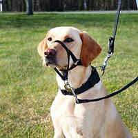 Учебная петля (недоуздок) для собак,L - XL