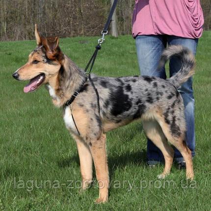 Шлея для собаки учебная (шея 27 - 36см/20мм), фото 2