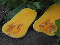ЮГ 205 насіння гарбуза United Genetics 1 000 насінин