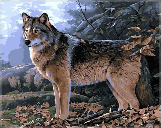 Набор-раскраска по номерам Волк в осеннем лесу, фото 2