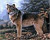 Набор-раскраска по номерам Волк в осеннем лесу