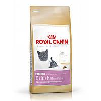 Royal Canin British Shorthair kitten для котят британская короткошерстная