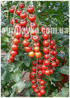Томат индетерминантный (черри) Арома F1 (1000семян) Yuksel, Турция