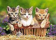 """Пазлы Castorland B-51168 """"Три милых котёнка"""" 500 элементов (B-51168), фото 2"""