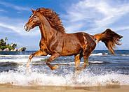 """Пазлы Castorland B-51175 """"Лошадь на пляже"""" 500 элементов (B-51175), фото 2"""