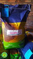 Семена подсолнечника под евролайтинг Тамара, 114-118 дней, фото 1