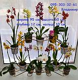 """Підставка для квітів на 14 кілець """"Фаленопсис-1"""", фото 2"""