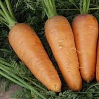 Семена Моркови Курода Шантане 1 г среднеспелый.