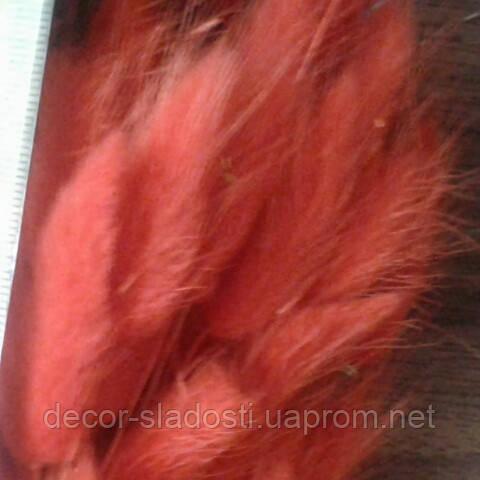 Сухоцвет Лагурус красно-оранжевый(10штук в пучке)