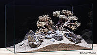 Композиция для аквариума. Бонсаи и Карпатский камень, фото 1