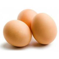 Яйцо инкубационное куриное породы Геркулес