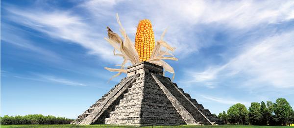 Насіння кукурудзи СИ Аріосо Форс Зеа (Syngenta) - 1 п. о.