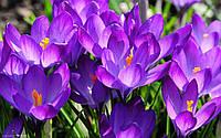"""Вафельная картинка """"Цветы 6"""""""