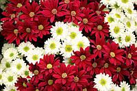 """Вафельная картинка """"Цветы 3"""""""