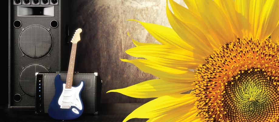 Насіння соняшника Естрада Круїзер (Syngenta) - 1 п. о. , фото 2