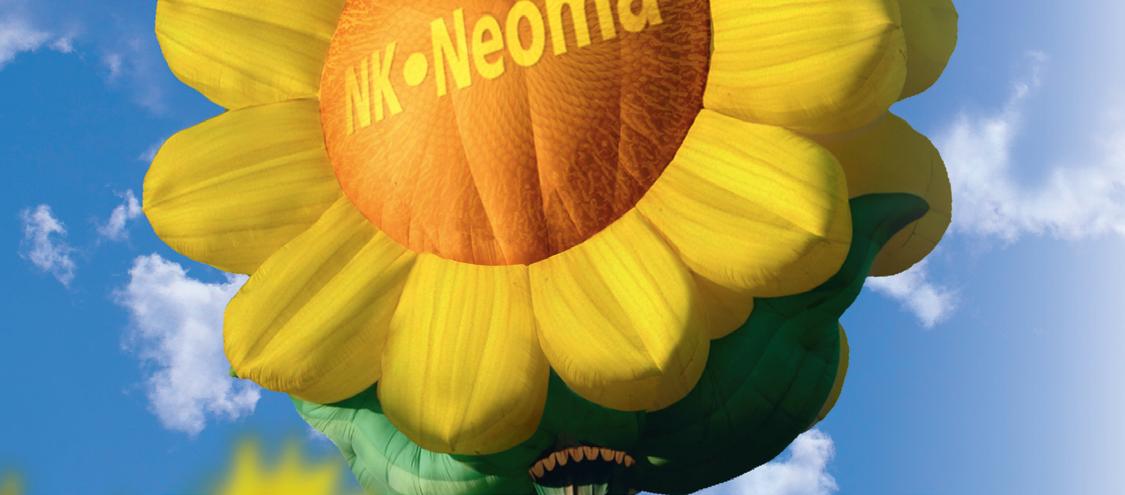 Насіння соняшника НК Неома Круїзер (Syngenta) закордон - 1 п. о.