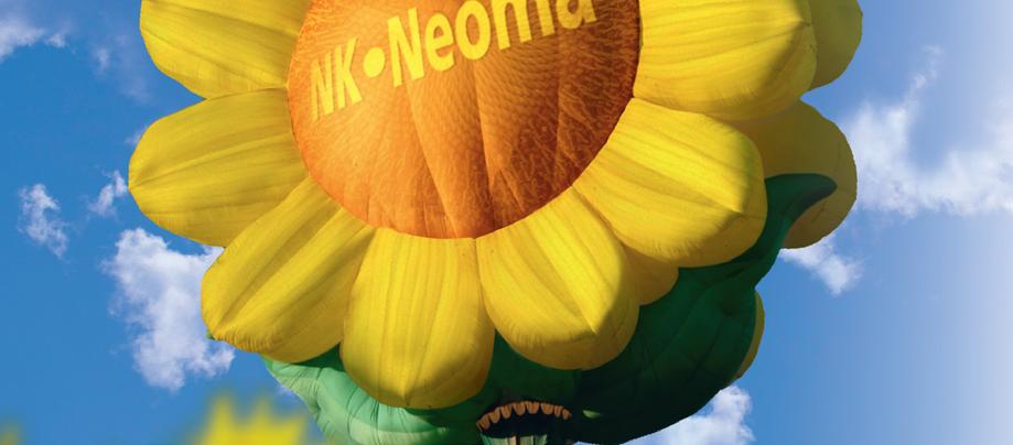 Насіння соняшника НК Неома Круїзер (Syngenta) - 1 п. о. укр., фото 2