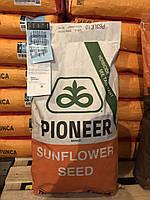 Семена подсолнечника П63ЛЕ10 Пионер (P63LE10 Pioneer)