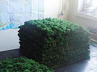 Панель со стабилизированным мхом  Расход 4кг/m2.Голландия., фото 2