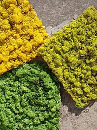 Панель зі стабілізованим мохом Витрата 4кг/m2.Голландія.