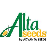 Хайсан 254 (A-G+) семена подсолнечника Advanta seeds