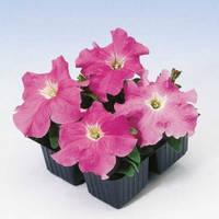 Семена цветов Петуния Танго F1 розовая 20шт