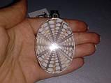 Натуральная индонезийская ракушка кулон с ракушкой в серебре Индия, фото 2