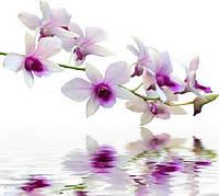 Отдушка Орхидея (Франция ) 10 мл / 1 л