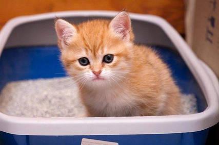 Наполнитель туалета для котов и кошек