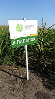 Семена кукурузы ДН Паланок ФАО 180, фото 1