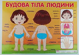 """Плакат """"Будова тіла людини"""" 0209/13104116У Ранок Украина"""