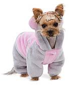Одежда для собак (осень, весна)