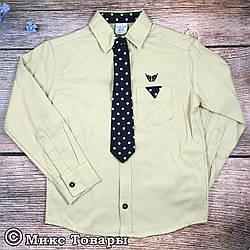 Турецкая рубашка+ галстук для мальчика Размер: 6,7,8,9,10 лет (7595)