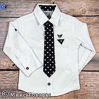 596378bde40 Белую рубашку мальчику 2 года оптом в Украине. Сравнить цены