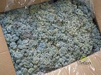 Cтабилизированный мох ягель для фитостен Цвет Льда Norske moseprodukter, фото 2