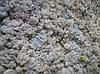 Cтабилизированный мох ягель для фитостен Цвет Льда Norske moseprodukter