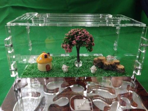 формикарий для муравьев