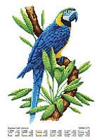 """Схема для вышивки бисером """"Красочный попугай"""""""