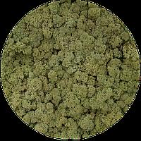 Стабилизированный мох оптом для фитостен  Olive Norske Moseprodukter AS, фото 3