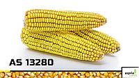 Семена кукурузы AS 13280, (ФАО 250)